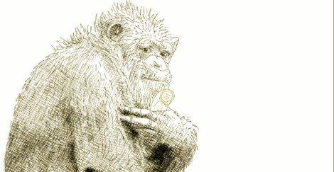 Chimp with banana - ink drawing