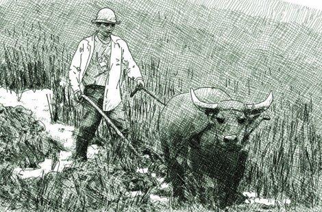 labour avec un buffle d'eau dans une rizière