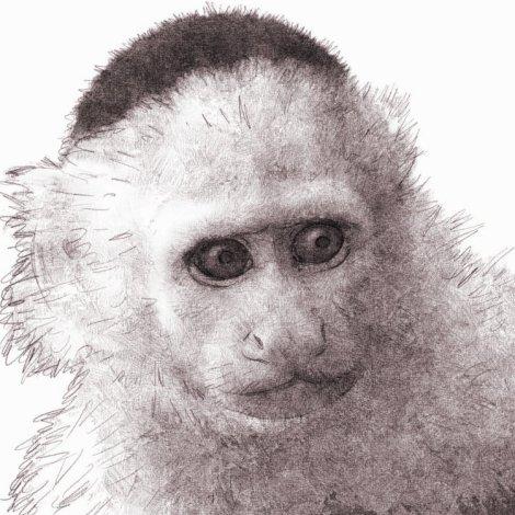 esperluette aka ampersand le singe capucin de Yorick Brown, dans Y le dernier homme