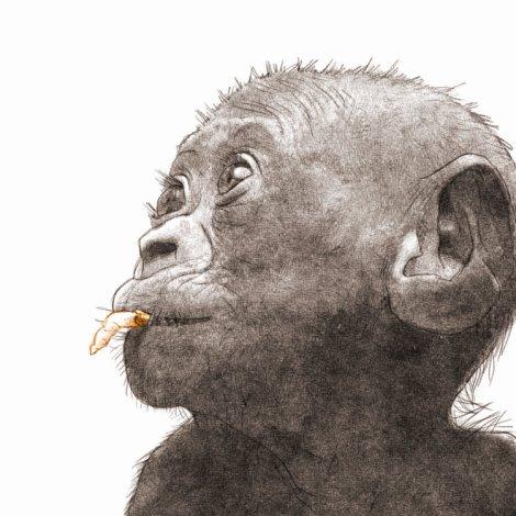 bébé bonobo, dessin numérique au crayon, par Audren Le Rioual