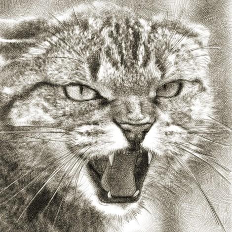 chat agressif dessin numérique au crayon
